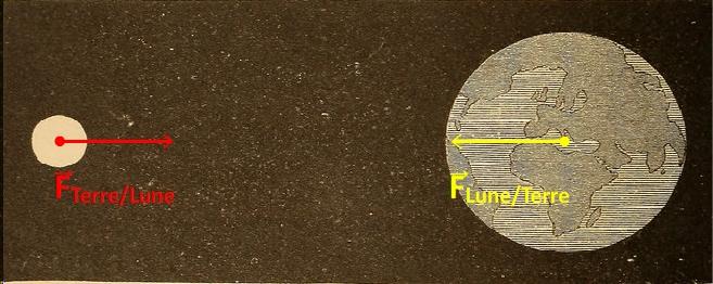 Représentation vectorielle des forces de gravitation entre la Terre et la Lune