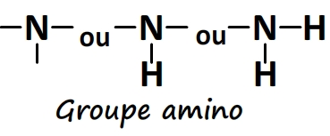 Groupe caractéristique amino