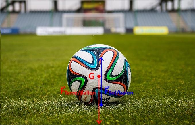 Vecteurs forces pour un ballon posé sur le sol
