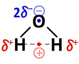 Molécule d'eau polaire